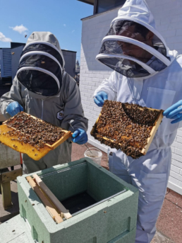 St Johns has installed a number of beehives on its roof as part of its efforts to become a more environmentally conscious organisation and to promote positive mental wellbeing among its employees. The centre, which is once again welcoming shoppers to its 100-strong cohort of stores, has acquired two initial hives, with each containing approximately 20,000 bees which will pollinate within a three-mile radius of the site. Bees play a critical role in preserving ecological balance and, as such, they are an important part of our wider ecosystem. Through pollination, bees have an impact on many parts of the environment, but particularly on the growth of crops, flowers and plants. Each hive installed on St Johns' rooftop will continue to grow, attracting up to 40,000 additional bees, and will positively contribute to the environmental generation of the local area in Liverpool. As well as the environmental benefits of the rooftop beehives, St Johns also hopes that its new initiative will promote positive mental wellbeing among its employees, as minding bees has been shown to reduce stress, anxiety and depression.